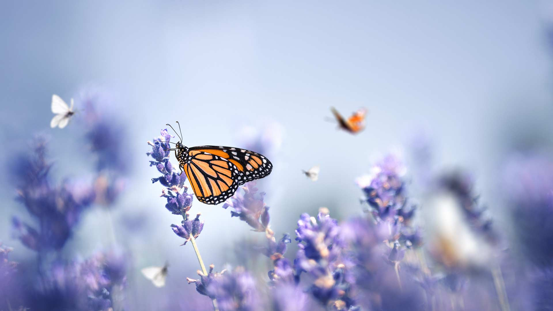 butterflies on flowers in the spring